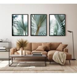"""""""Trio palmeira natural""""..."""