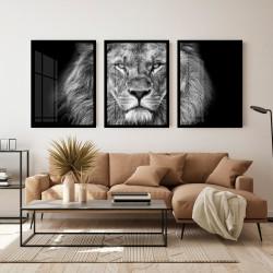 """""""Trio leão"""" Conjunto de..."""