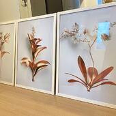 Trio floral rosê gold 💛 Uma composição elegante, moderna e delicada!  O conjunto é perfeito para consultórios, clínicas, sala, escritório e quarto 🤍  O valor do conjunto vai depender do tamanho, nós temos várias opções e para conferir todas é só clicar no produto marcado na foto e abrir no site 🤍